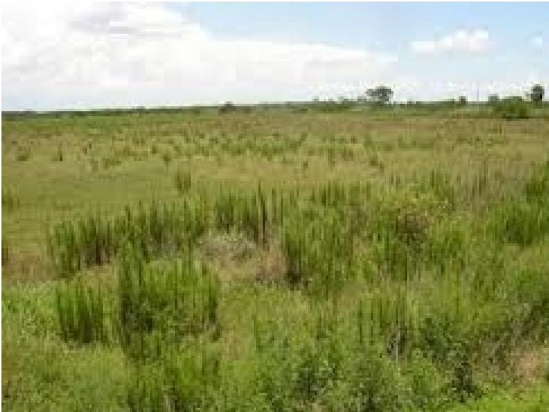 Oversized Lot- Excellent Investment : Lake Whales : Polk County : Florida
