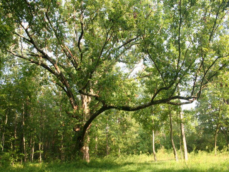 11.2 Ac Home Site Off River Rd West : Goochland : Goochland County : Virginia