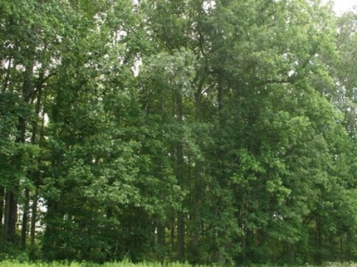 63.7 Ac W/ Great Timber On Edgar Rd : Ruther Glen : Caroline County : Virginia