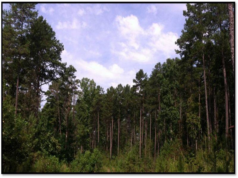 Little River Tract : Salem : Oconee County : South Carolina