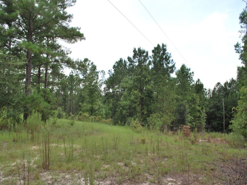 Wilson Landing Lot 4 : Baxley : Appling County : Georgia