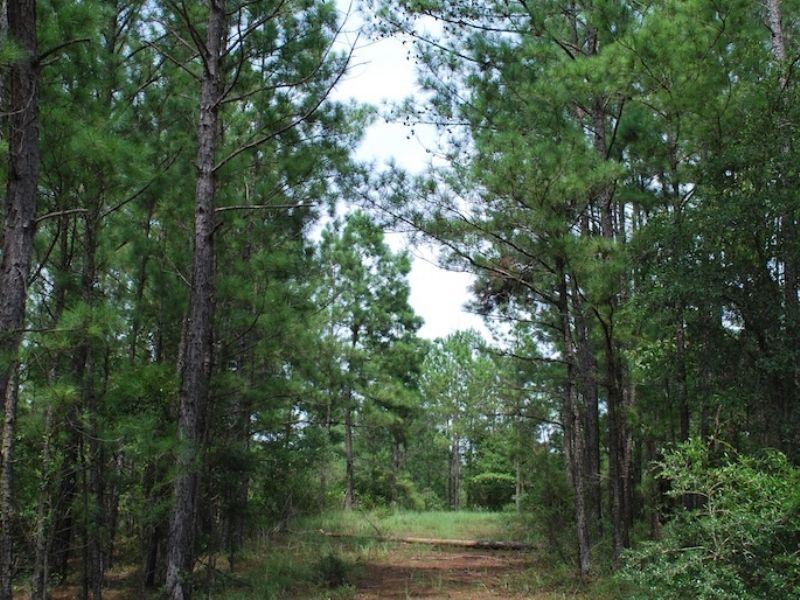 Wilson Landing Lot 1 : Baxley : Appling County : Georgia