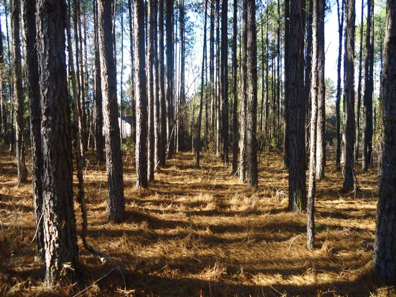 2.24 Acres Wooded - Only $8,950 : Dublin : Laurens County : Georgia