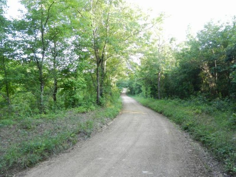34+/- Acres Near Vincent : Vincent : Shelby County : Alabama