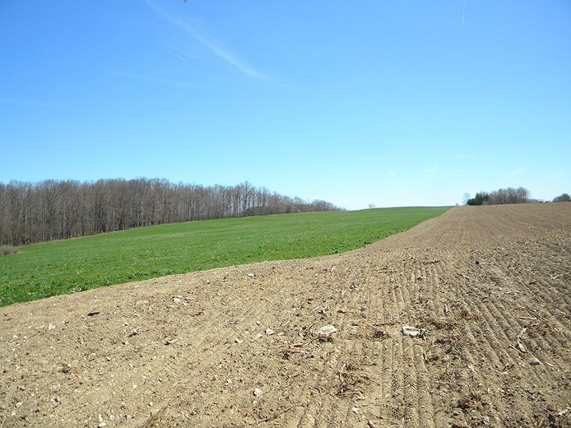87 Acres Organic Tillable Farmland : Wheeler : Steuben County : New York
