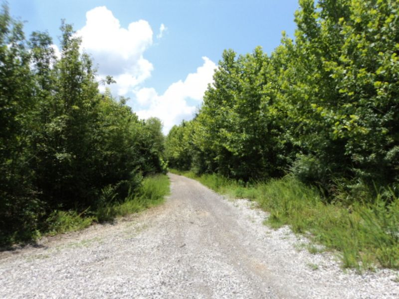 16.4 +/- Acres Near Oxford : Oxford : Calhoun County : Alabama
