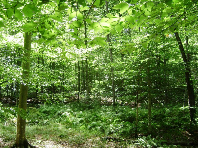 20 Western Adirondack Property : Ohio : Herkimer County : New York