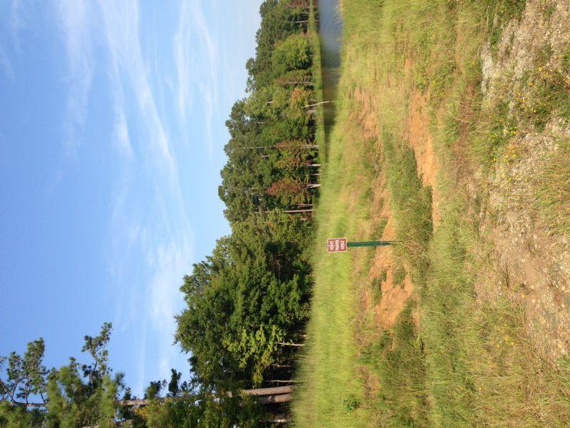 Nc Camera Test : Murphy : Alamance County : North Carolina