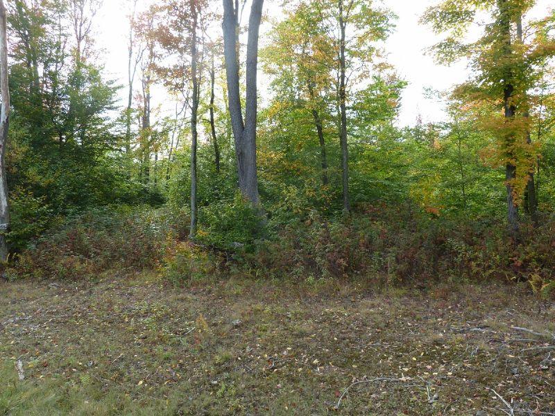 #1780 ~ Mountaintop Setting : Blossburg : Tioga County : Pennsylvania