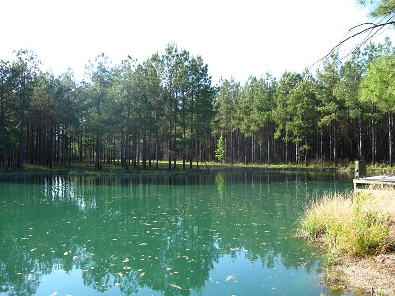 Recreational Timber Tract With Pond : Georgetown : Georgetown County : South Carolina