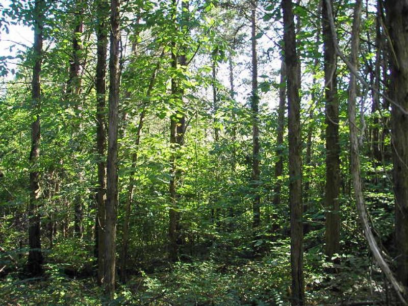 Hunter's Retreat : Cumberland : Cumberland County : Virginia