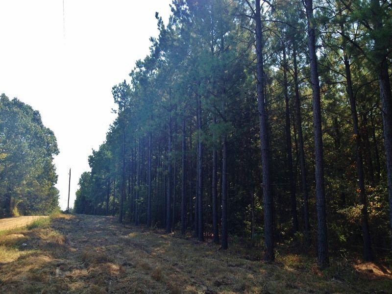Piney Creek : Antlers : Pushmataha County : Oklahoma