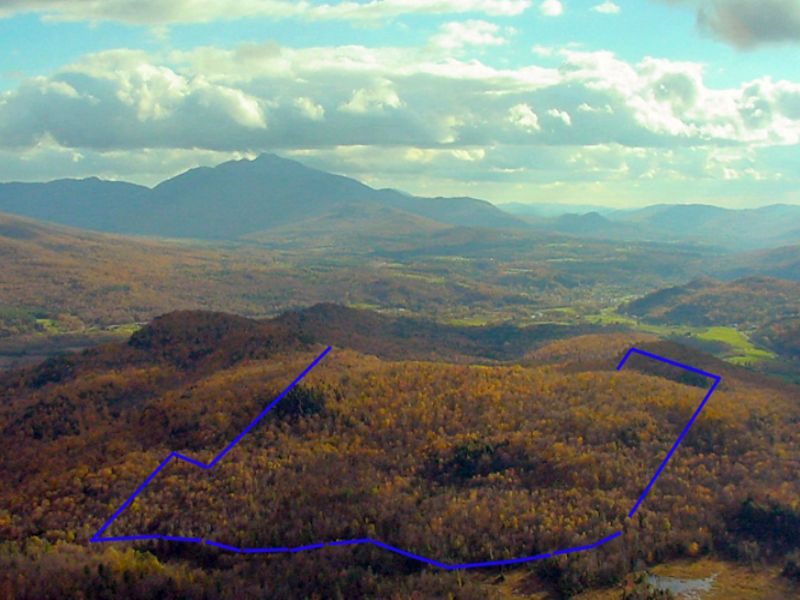 Quinn Forest South : Cambridge : Lamoille County : Vermont
