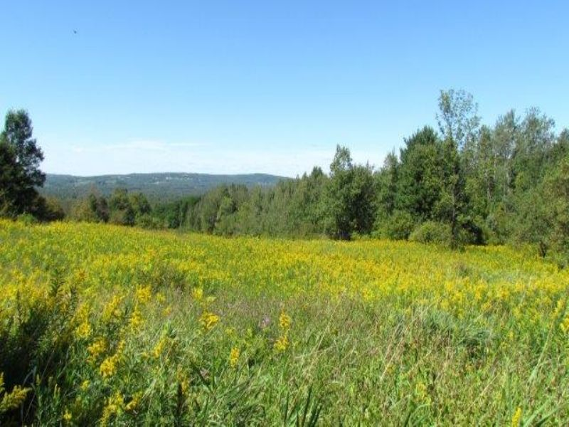 Wild Apples & Mohawk Valley Views : Schuyler : Herkimer County : New York