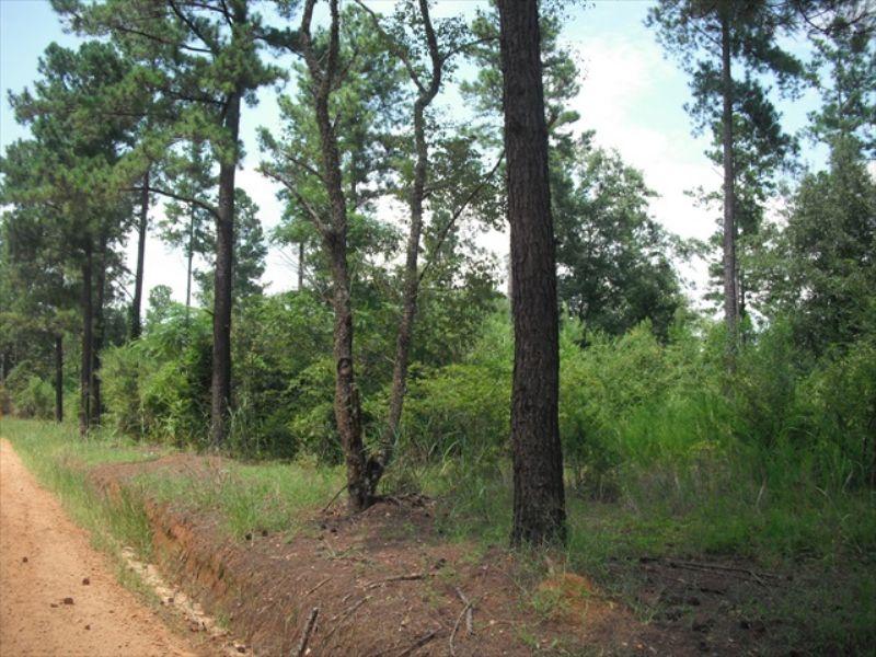 Small Recreational Tract : Sandersville : Washington County : Georgia