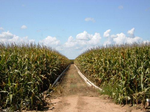 Precision Graded Farm For Sale : Scott : Lonoke County : Arkansas
