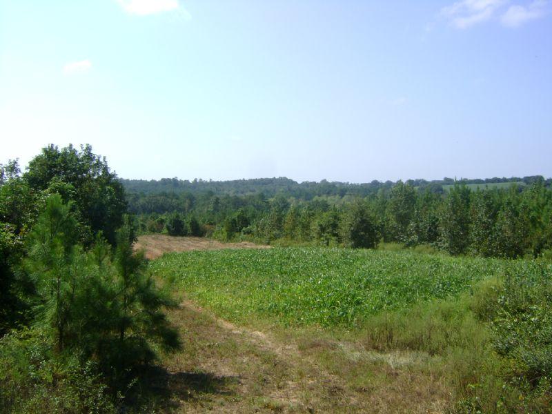 Phillips Road Tract : Ariton : Dale County : Alabama