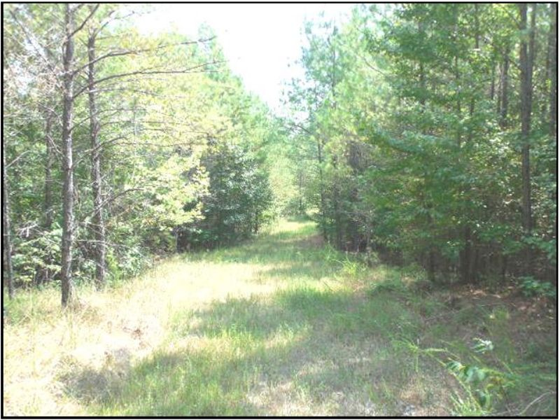 101 Acres : Carrollton : Carroll County : Mississippi