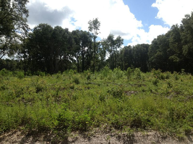 30 Acres Priced To Sell : Archer : Alachua County : Florida