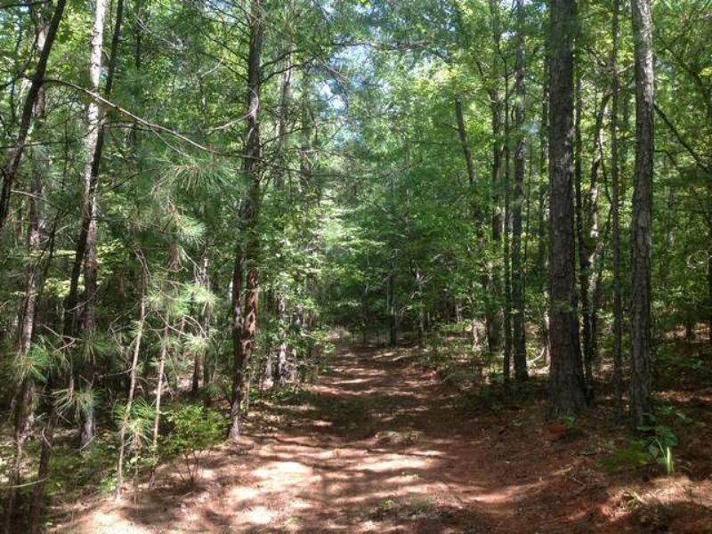 66+/- Acres For Sale : Goodwater : Coosa County : Alabama