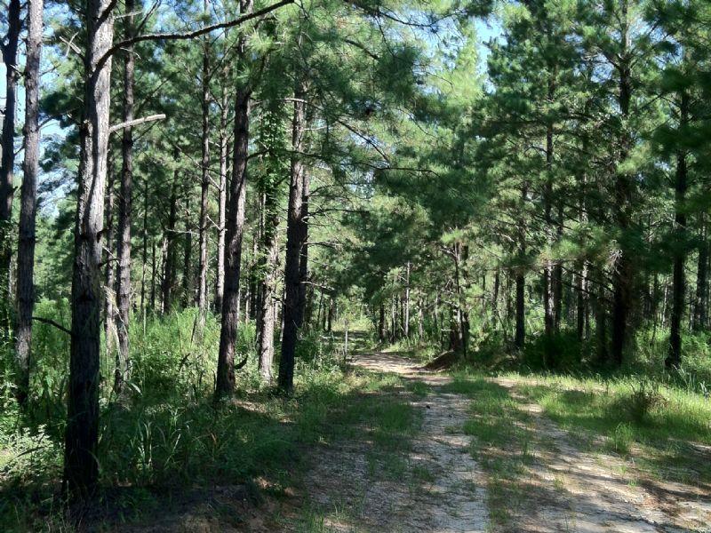Slash Creek Tract : Gordon : Wilkinson County : Georgia