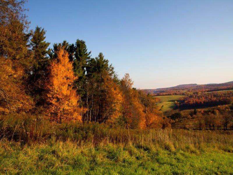 Lender Ordered Short Sale : Meridale : Delaware County : New York