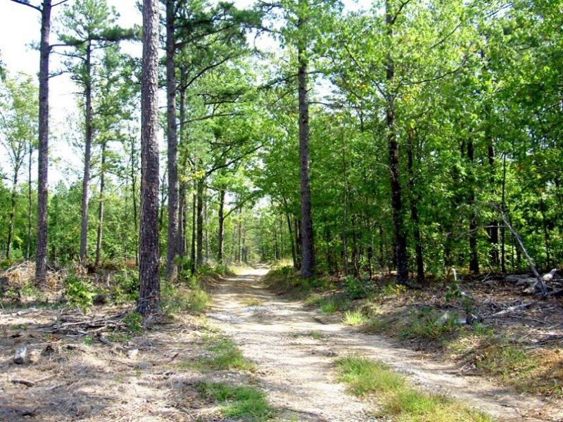 19.75 Acres Fronts National Forest : Summersville : Shannon County : Missouri