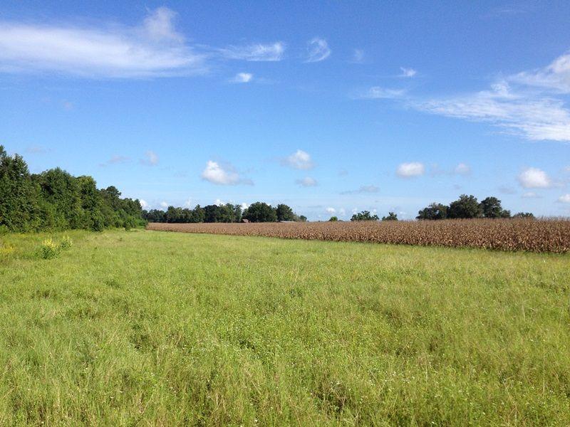 Prime Farmland : Olar : Bamberg County : South Carolina