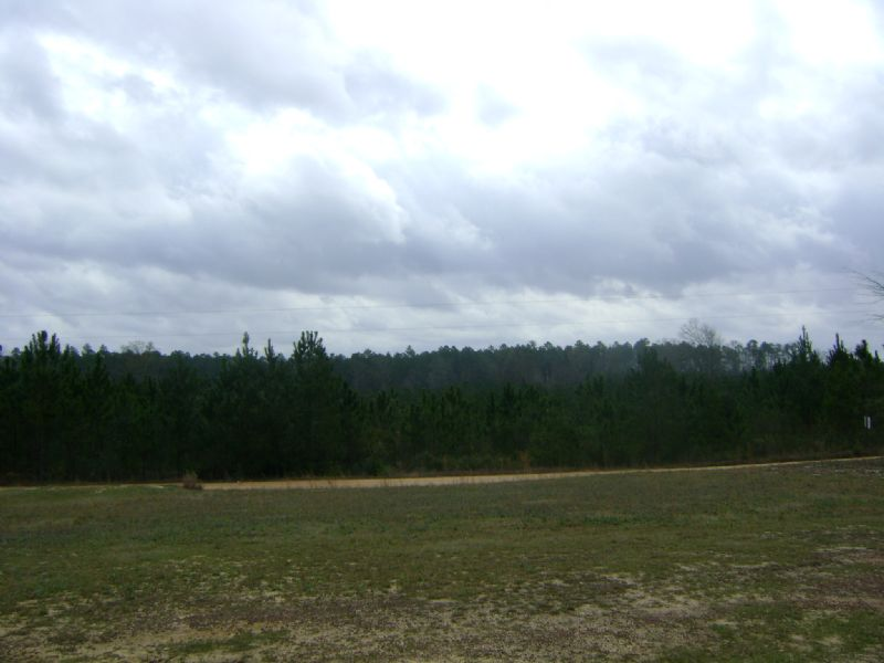 Turner Rd Tract : Mcintosh : Washington County : Alabama
