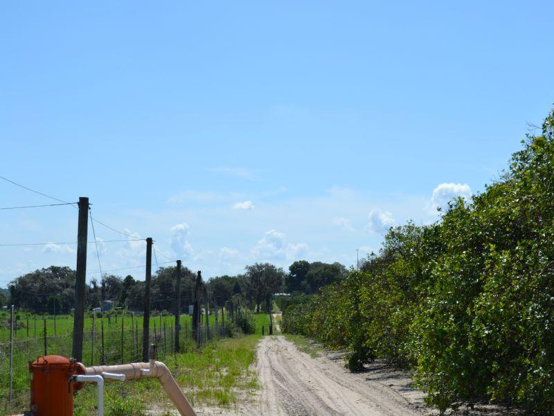 Chelsea Alturas Grove : Bartow : Polk County : Florida