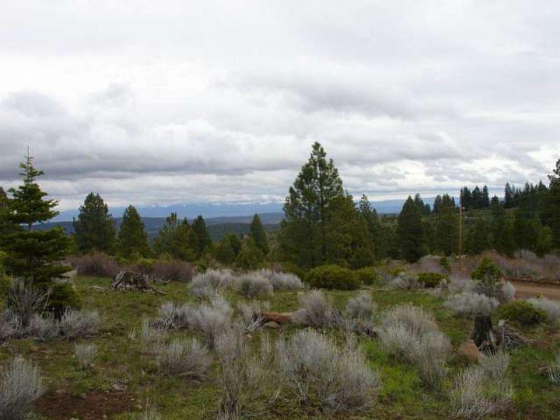 California Pines Paradise : Alturas : Modoc County : California