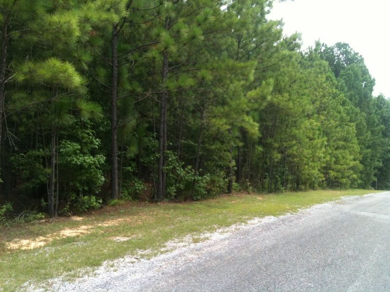 Large Pineview Subdivision Homesite : Green Pond : Bibb County : Alabama