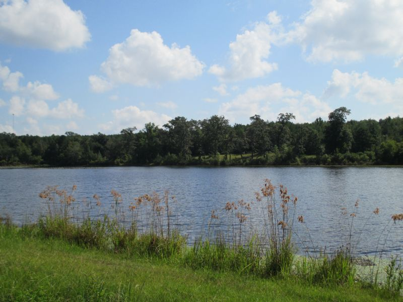Mule Creek Preserve 20 Acre Pond : Byron : Peach County : Georgia