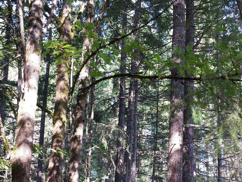 Beautiful Secluded Land : Graham : Pierce County : Washington