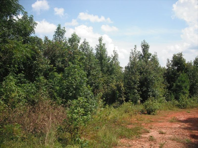 Affordable Hunting Land : Gray : Jones County : Georgia
