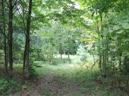 30 Acres Woodlands Salmon River : Parish : Oswego County : New York