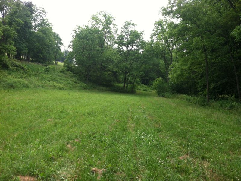 10 Wooded Acres W/ Building Site : Coshocton : Coshocton County : Ohio
