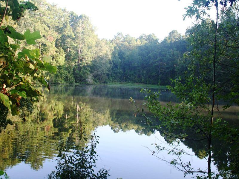 White Farm : Quincy : Gadsden County : Florida