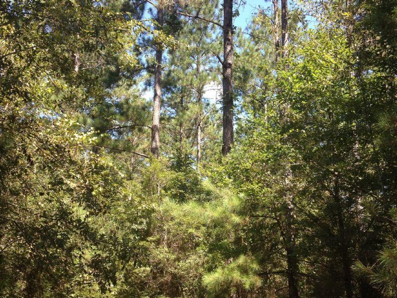 135 Acres : Perkinston : Stone County : Mississippi