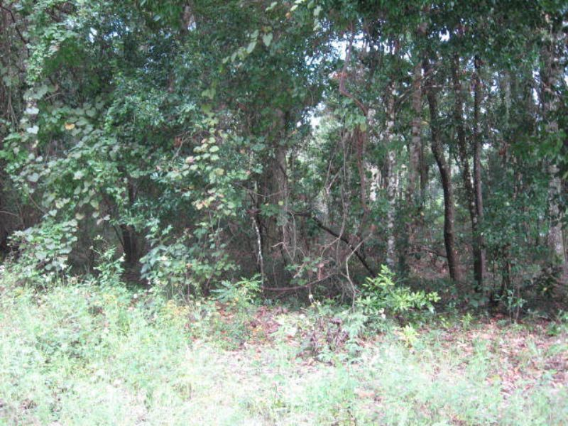 3.2 Acres Priced To Sell : Old Town : Dixie County : Florida