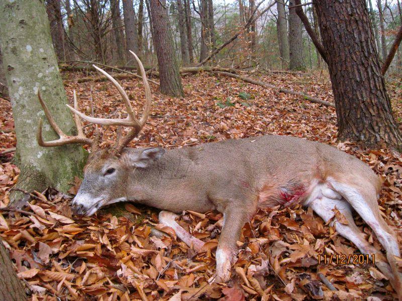 Great Deer Hunting : Edmonton : Metcalfe County : Kentucky