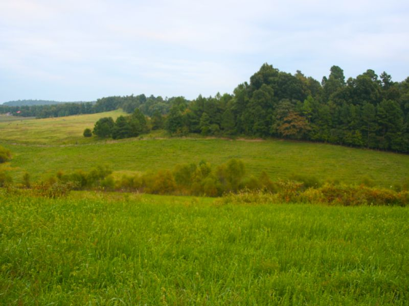 110 Acres Of Pasture & Good Hunting : Jetson : Butler County : Kentucky