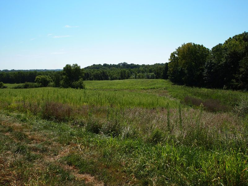 62.17 Acres Secluded Hunting Farm : Perry : Brown County : Illinois