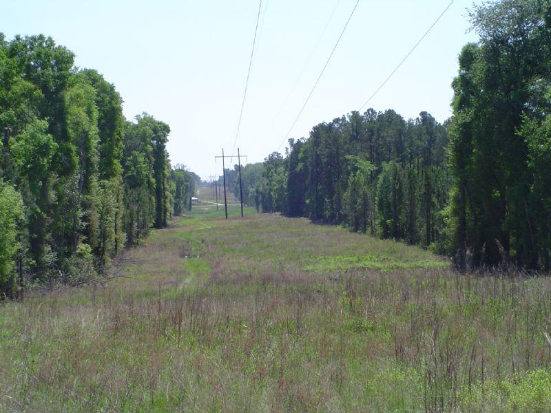 Hambrick 4 Tract : Eastman : Dodge County : Georgia