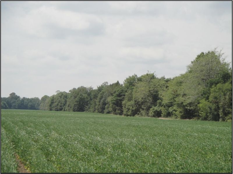 39.93 Acres : Tchula : Holmes County : Mississippi