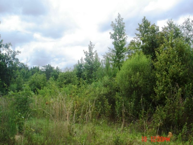 60 Acres Of Timber And Hunting Land : Preston : Kemper County : Mississippi