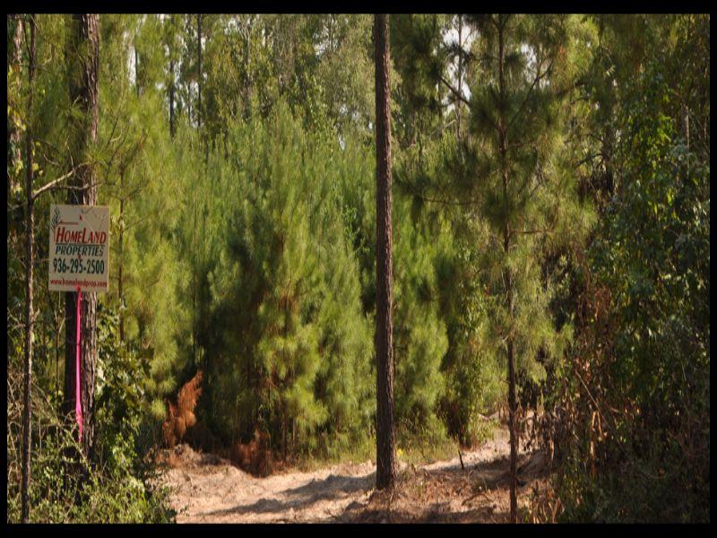 20 Acres- Fountain Creek Rd. : Groveton : Trinity County : Texas