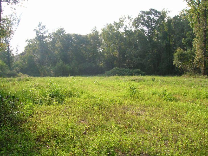 8 Ac. Ingram Rd. Millbrook : Millbrook : Elmore County : Alabama