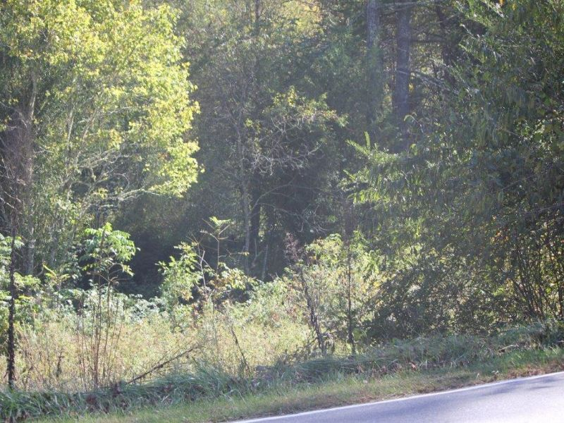 29.81 Acres Rural Land For Sale : Brevard : Transylvania County : North Carolina