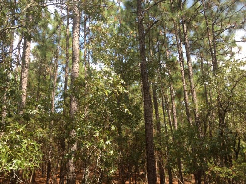 Lowest Price/acre : Gaston : Calhoun County : South Carolina